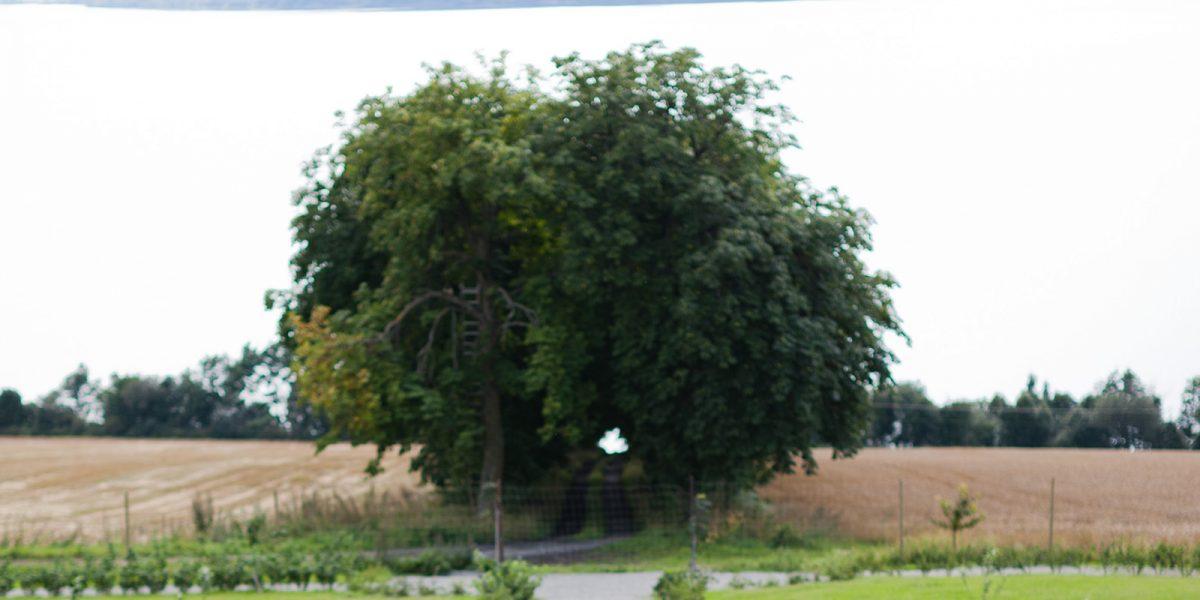 Utsikt fra hagen på Hovelsrud gård. Foto: Haavard Gjelseth