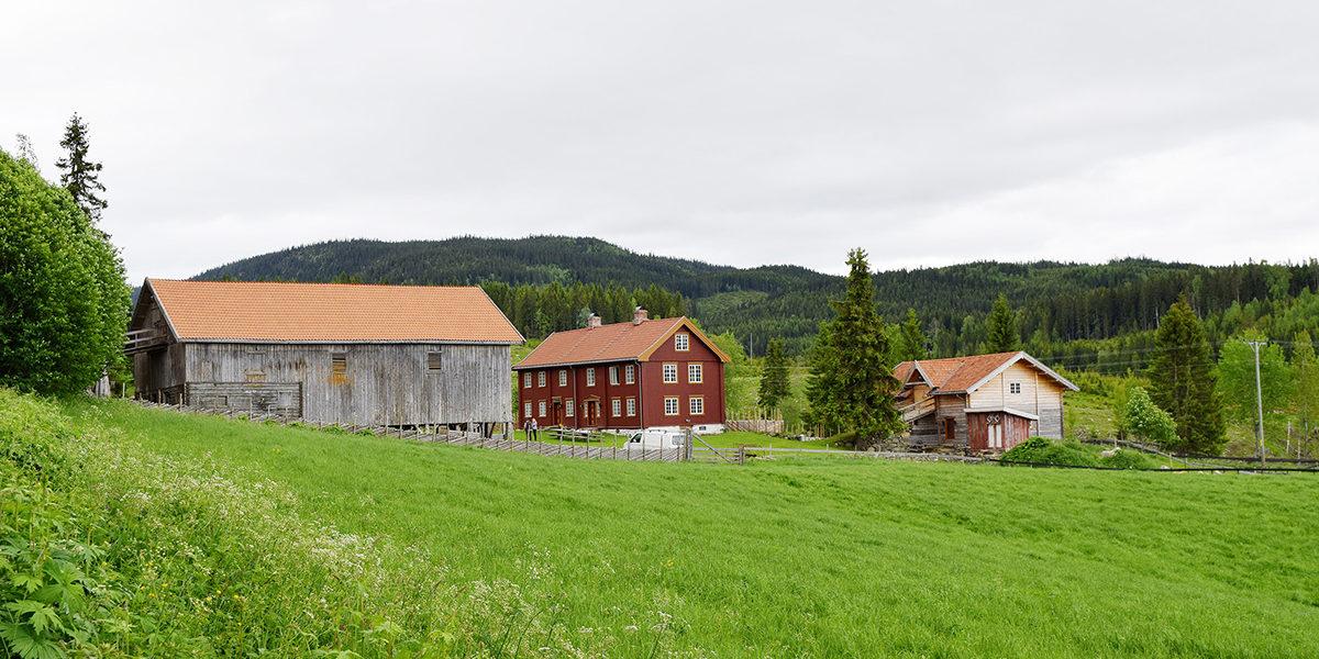 Grøna ligger midt i beitelandskapet i et kulturmiljø nær den gamle Vestre Trondhjemske Kongevei. I dag beiter flere av Per Idars dyr i dette landskapet. (Foto: Einar Engen/Kulturminnefondet)