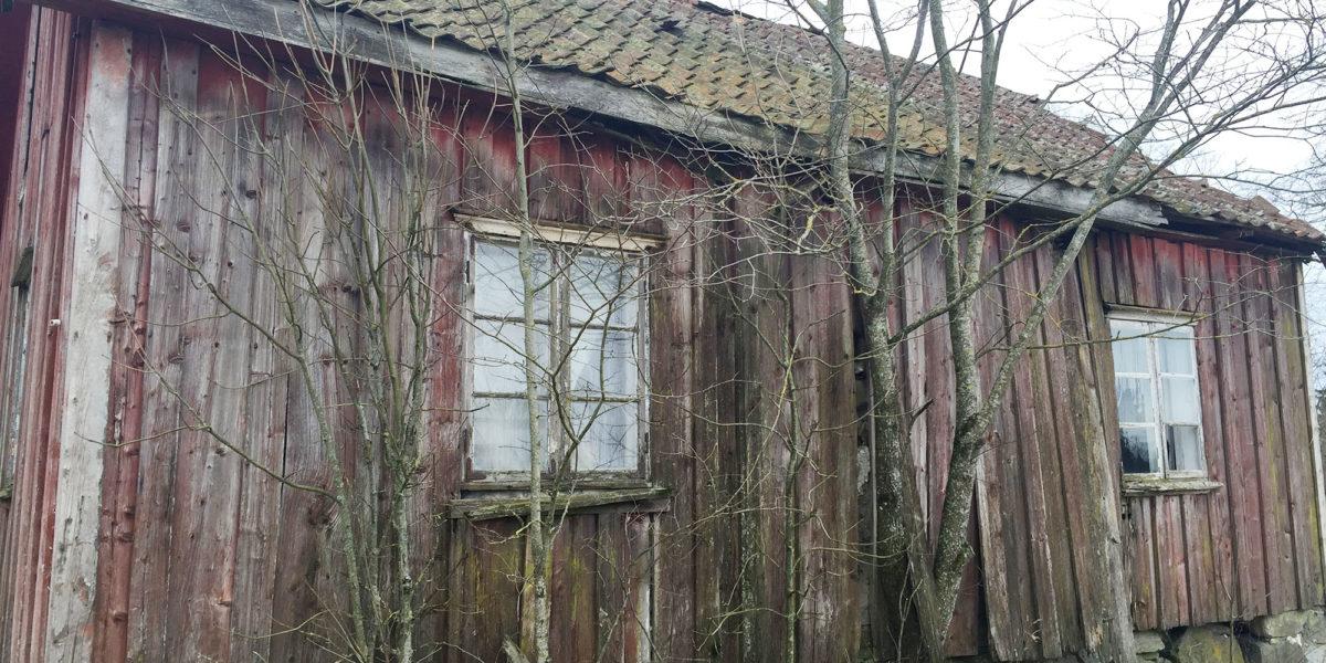 Huset sto utsatt med trær og busker som vokste tett inntil. (Foto: Linda Herud/Kulturminnefondet)
