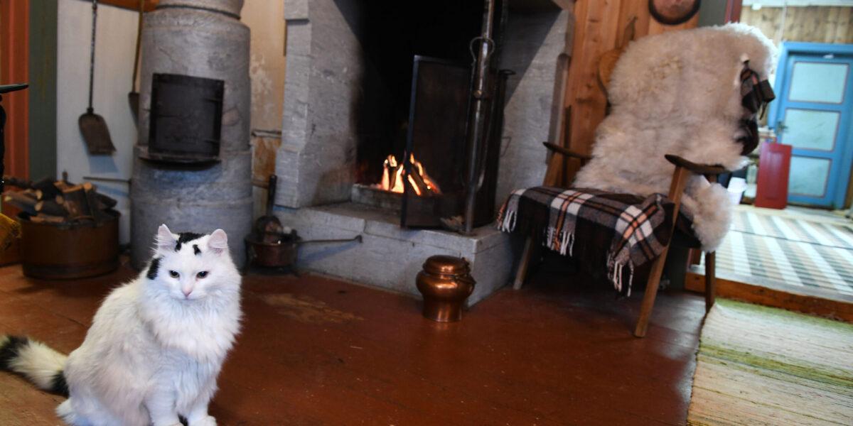 Katten Kirius har funnet seg godt til rette i Bakkemoen. Foto: Einar Almehagen