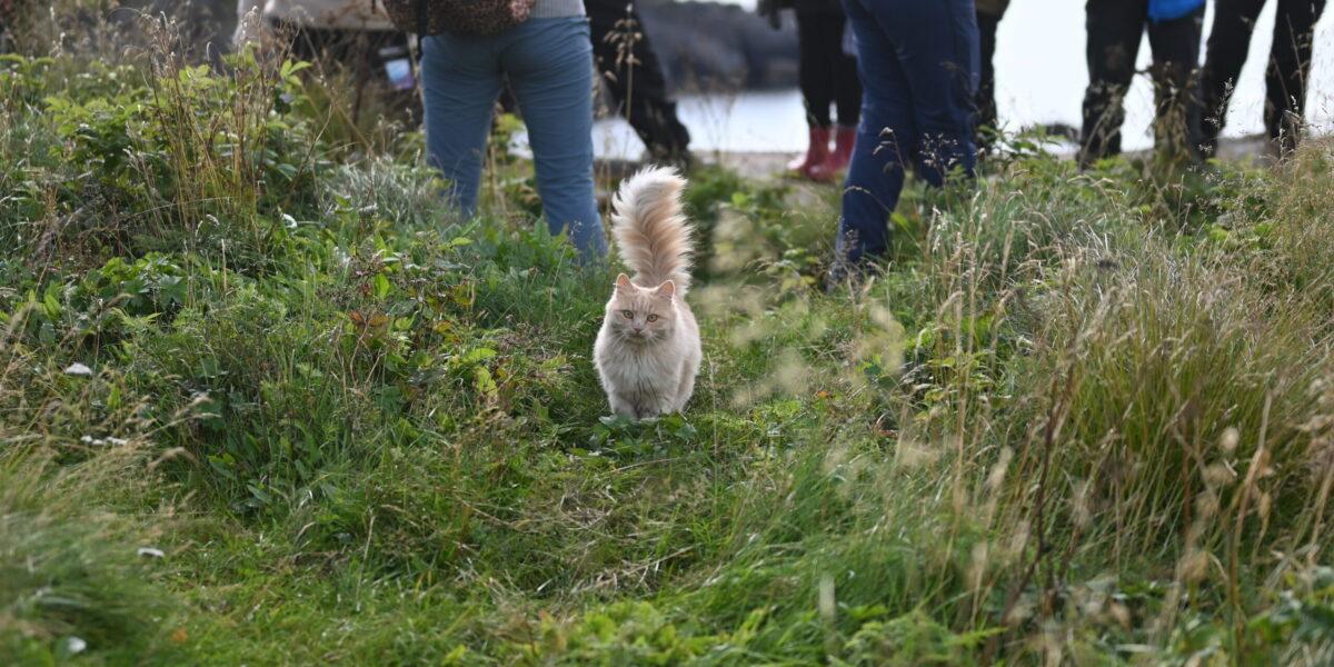 Sosial: Katten Snøfrid følger gjerne gjestene rundt på øya. Foto: Christine Nevervik